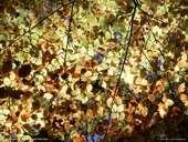 medium_automne.2.jpg