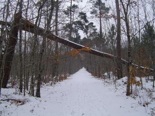 canejan sous la neige 040.JPG