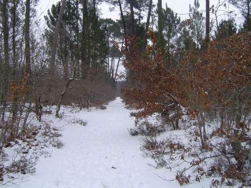 canejan sous la neige 038.JPG