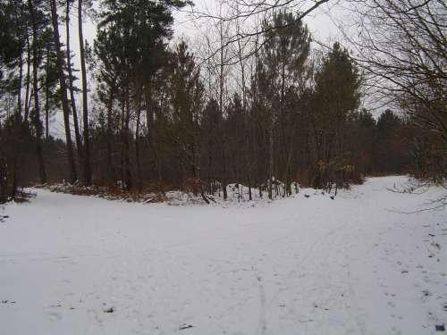 canejan sous la neige 032.JPG