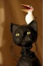 Histoire-de-la-mouette-et-du-chat-qui-lui-apprit-a-voler-d-apres-le-roman-de-Luis-Sepulveda-par-les-Ateliers-du-Capricorne-a-Pont-du-Chateau_medium.png