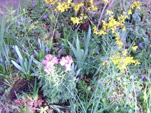 un coin du jardin,printemps 2011