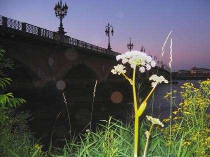 angelique_pont2pierre.jpg