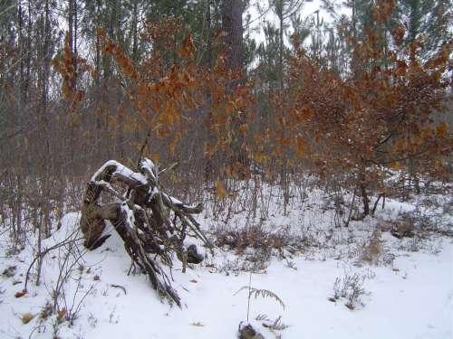 canejan sous la neige 036.JPG