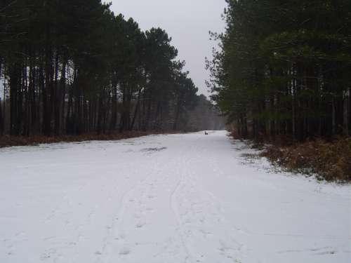 canejan sous la neige 020.JPG
