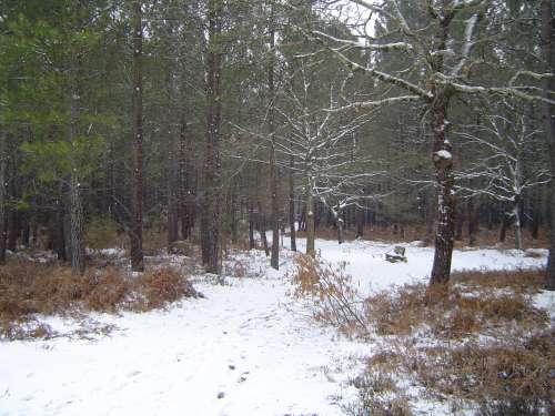 canejan sous la neige 018.JPG