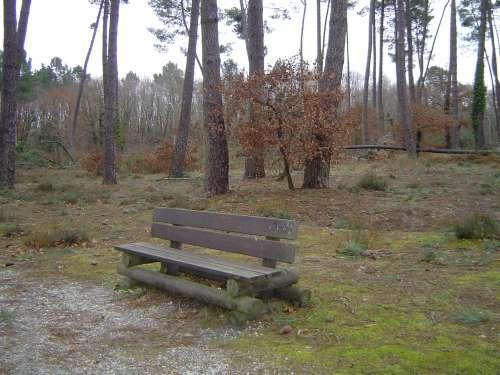 balade,en forêt