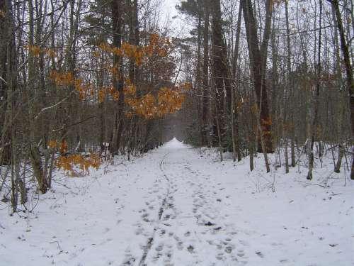 canejan sous la neige 042.JPG