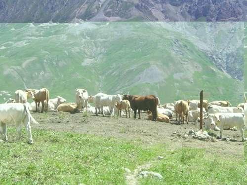 randos autour de valloire,juillet 2011